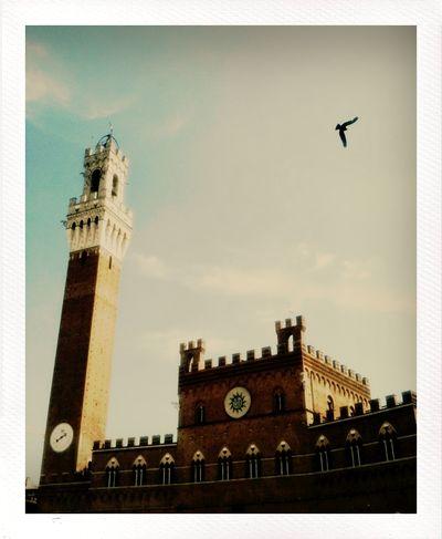 Piazza di Campo - Siena